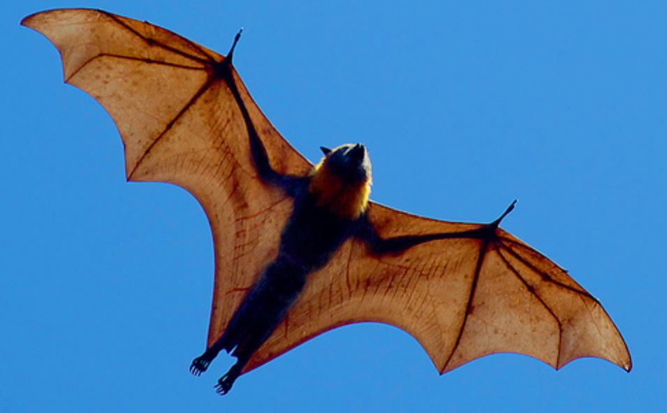 Bat Dream: Meaning and Interpretation