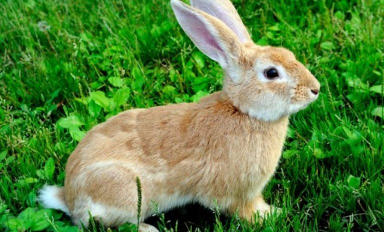 Dreaming of Rabbits: Meaning and Interpretation