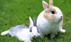 Dreaming of Rabbits: Meaning and Interpretation