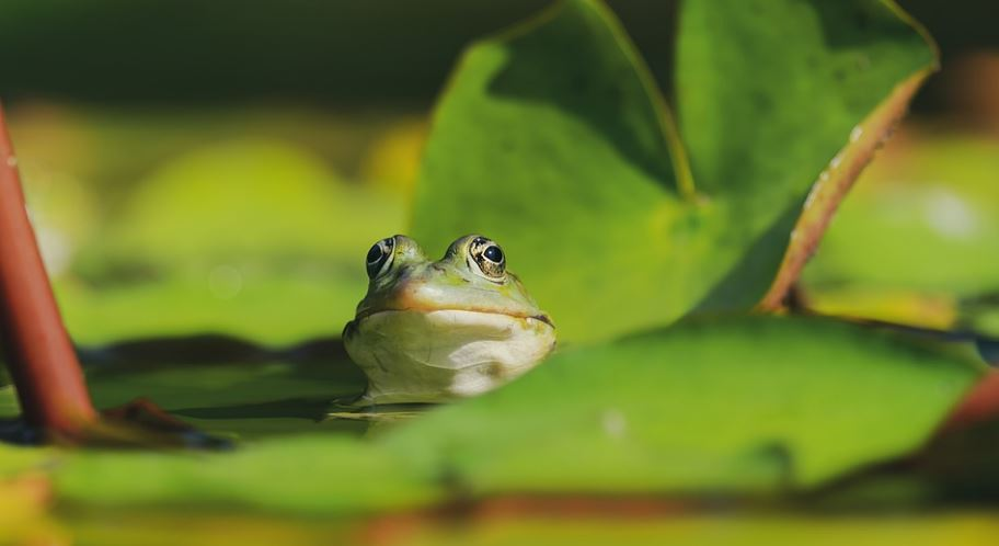 Frog Dream: Meaning and Interpretation