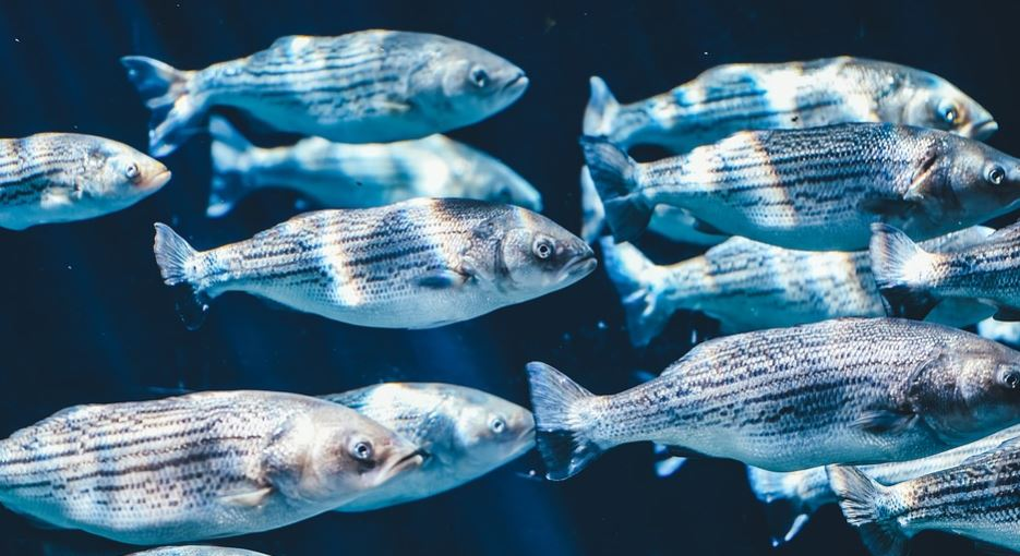 Dream About Fish: Meaning and Interpretation