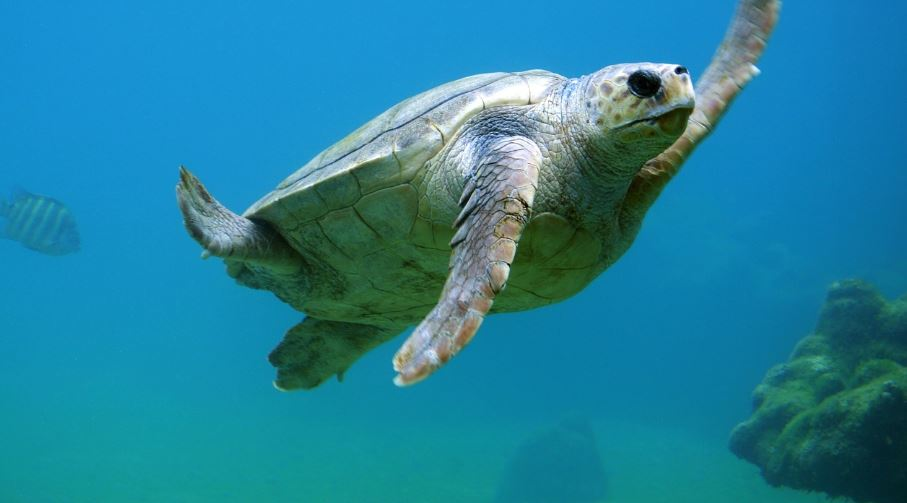 Dreaming Of Turtles: Meaning and Interpretation